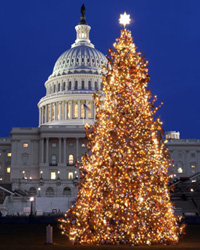 2004 Capitol Christmas Tree